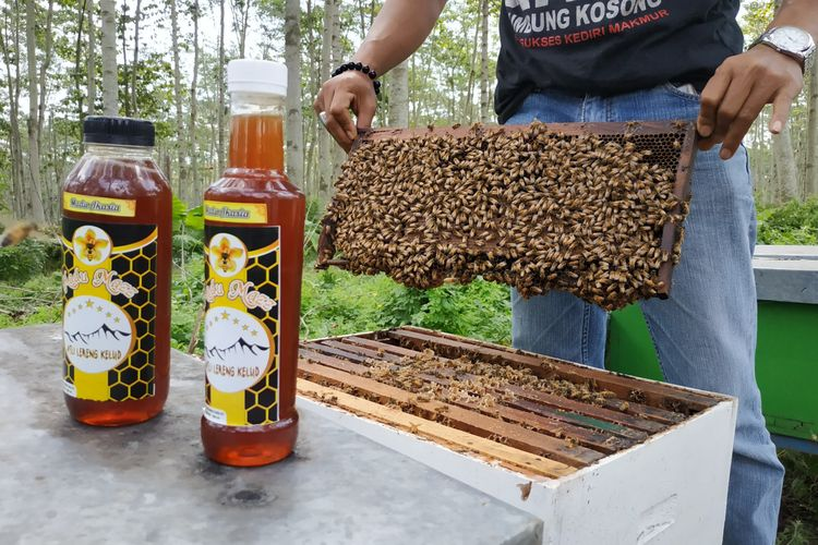 Peternakan Lebah madu di kawasan lereng Gunung Kelud di Kabupaten Kediri, Jawa Timur.