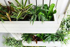 Trik Membuat Taman Vertikal di Rumah