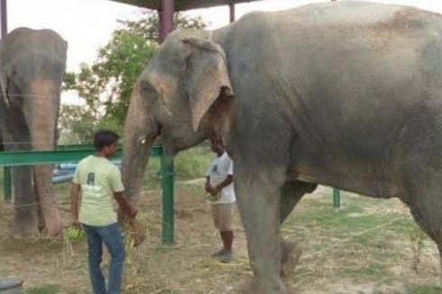 Raju Si Gajah Menangis Mendapatkan