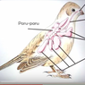 Mengapa Saat Terbang Burung tidak menggunakan Paru-paru untuk Bernapas? Jawaban Soal TVRI 4 Agustus SD Kelas 4-6