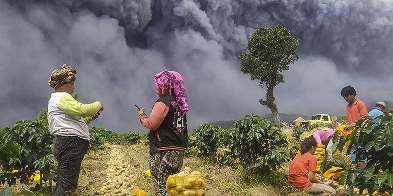 Warga memanen kentang dengan latar belakang Gunung Sinabung yang menyemburkan material vulkanik di Karo, Sumatera Utara, Senin (10/8/2020). Gunung Sinabung erupsi dengan tinggi kolom 5.000 meter di atas puncak atau sekitar 7.460 meter di atas permukaan laut.