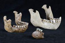 Meganthropus Paleojavanicus: Penemuan, Kehidupan, dan Ciri-ciri