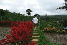 Tamansuruh, Tempat Wisata Pertanian di Banyuwangi yang Sudah Siap Taati Protokol Kesehatan