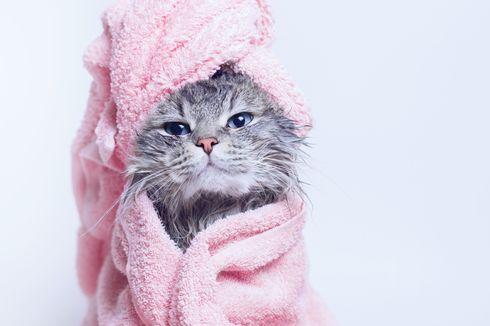 4 Penyakit yang Rawan Jangkiti Kucing di Musim Hujan