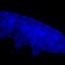 Temuan Baru, Makhluk Nyaris Abadi Tardigrade Tahan Radiasi UV Mematikan