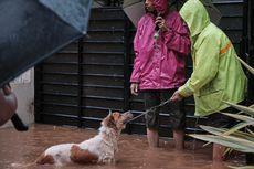 15 Anjing dan 12 Kucing Peliharaan Korban Banjir Dievakuasi