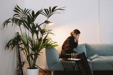 5 Jenis Tanaman Indoor yang Bisa Tumbuh Tinggi