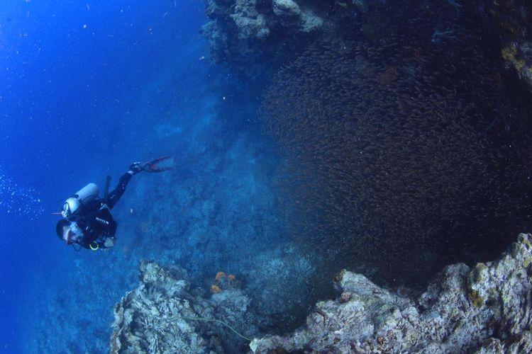 Menyelam di Pulau Padamarang Kolaka
