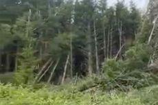 Pohon Tumbang Misterius di Hutan Inggris, Diduga Bekas UFO Jatuh