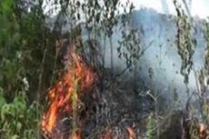 Empat Orang Tewas Saat Padamkan Kebakaran Hutan Pinus