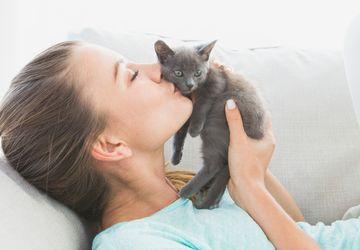 Simak, Tanda-tanda Kucing Menyayangi Anda