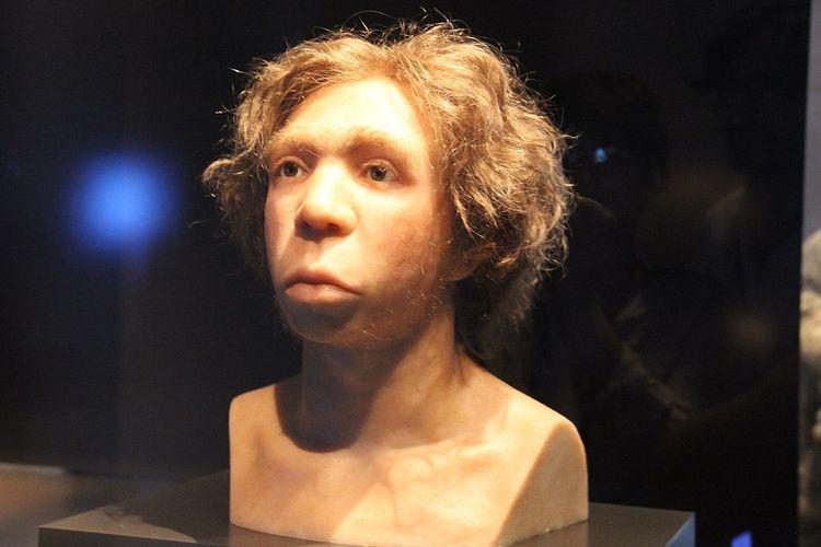 Rekonstruksi wajah manusia purba Neanderthal.