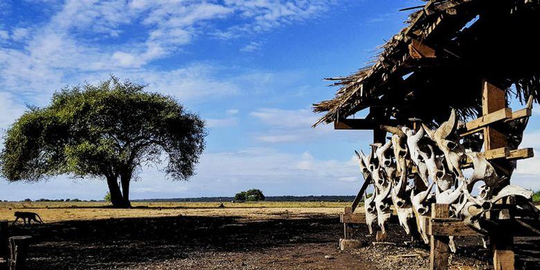Taman Nasional Baluran (TNB) di perbatasan Banyuwangi-Situbondo, Jawa Timur.