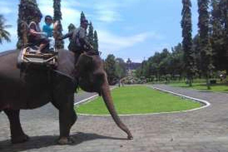 Wisatawan sedang naik gajah di komplek Taman Wisata Candi Borobudur, Magelang, Jawa Tengah.