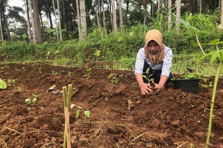 Seorang petani di Kampung Cilampayan, Desa Tanjung Jaya, Kecamatan Pakenjeng, Kabupaten Garut tengah menanam sayuran. Seluruh proses penanaman masih menggunakan cara konvensional.