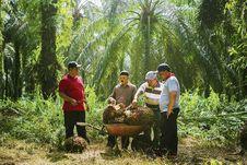 Lewat Program PSR, Sinar Mas Agribusiness and Food Berusaha Tingkatkan Produktivitas Sawit Petani