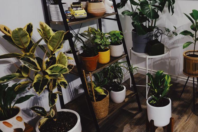 Ilustrasi tanaman hias di balkon apartemen.