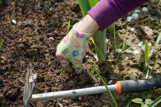 Cara Menggunakan Cuka untuk Membunuh Rumput Liar