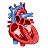 Jantung dan Lapisan Penyusunnya