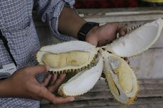 Penggila Durian, Ada Durian Serba Rp 11.000 di Festival Durian Depok