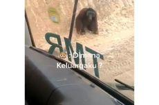 Cerita di Balik Video Viral Orangutan Melintas di Jalan Tambang Batubara Kaltim