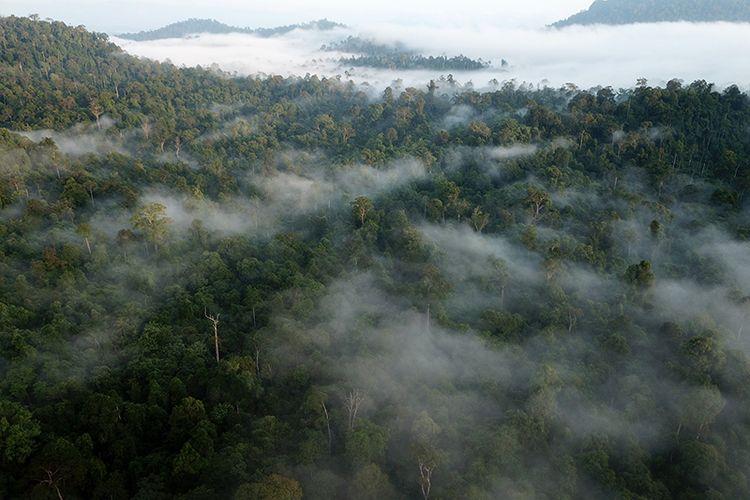 Foto Dok FKL, kondisi hutan di Kawasan Ekosisten Lauser, Soraya, Subulussalam, Aceh, foto ini direkam dengan menggunakan droen oleh staf FKL pada 9 Januari 2019. Kamis (24/01/2018).