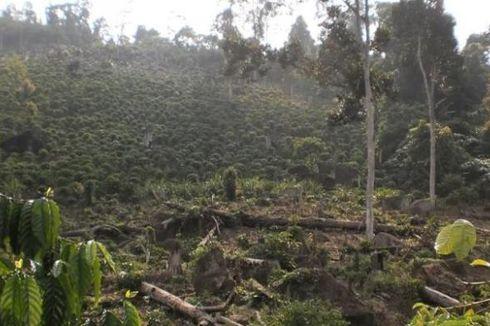 20 Hektar Hutan Lindung Bukit Sanggul Dirambah