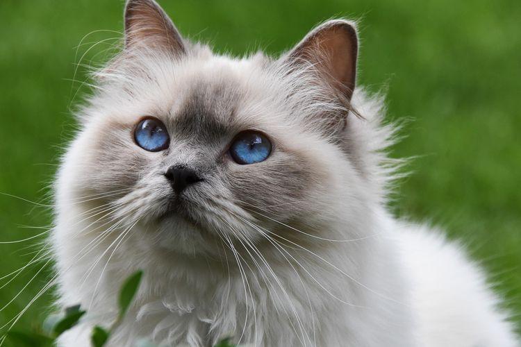 Ilustrasi kucing di taman.