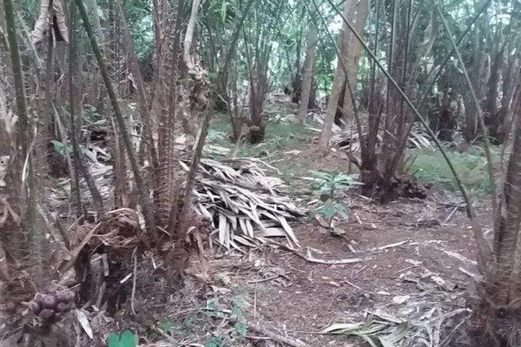 ILUSTRASI - Kebun salak di Banjarmangu Banjarnegara (Tribun Jateng/ Khoirul Muzaki)