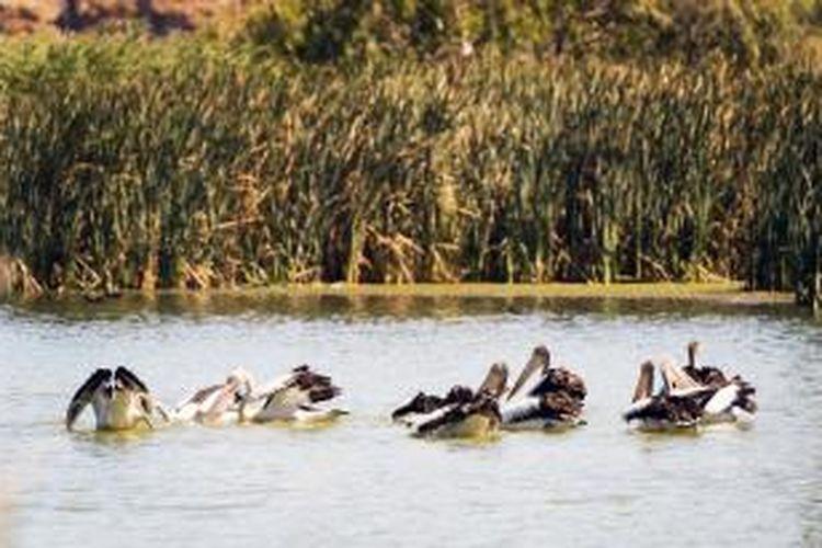 Selagi belayar, ada beragam petualangan menarik bisa Anda cicipi di Murray River. Anda bisa mengetes nyali dengan bermain ski air atau menembus laguna indah dengan kano. Selain itu, Anda juga dapat mengamati burung pada lahan basah sambil menjelajahi padang semak, dan melalui hutan gum merah.