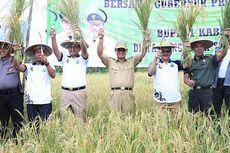 100 Hektar Lahan di Kaltara Siap Ditanami Padi