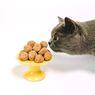 10 Daftar Makanan dan Minuman yang Tidak Boleh Dikonsumsi Kucing