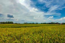 Tahun Ini Pemerintah Alokasikan Rp 50 Triliun untuk KUR Pertanian