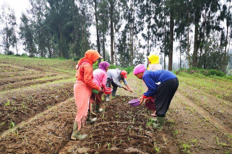 Kementerian Pertanian optimis dapat melakukan swasembada bawang putih di 2021 nanti.