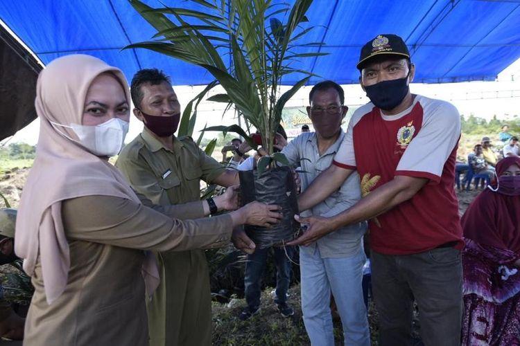 Bupati Luwu Utara Indah Putri Indriani saat menyerahkan bibit kelapa sawit secara simbolis, Selasa (07/07/2020).