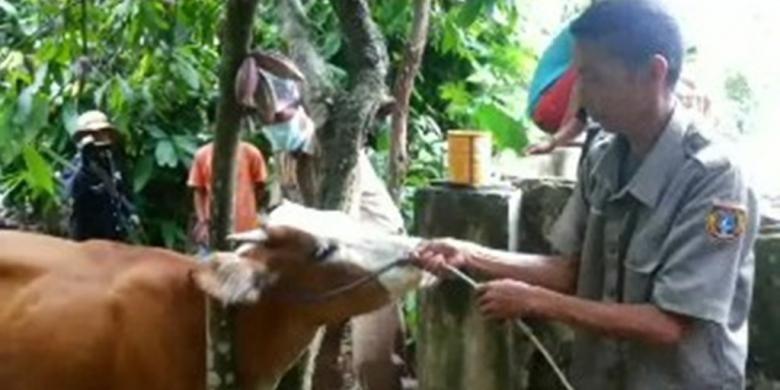 Penyakit antraks yang pertama kali menyerang puluhan ekor sapi dan kerbau di Pinrang, Sulawesi Selatan, diduga merebak luas hingga ke Polewali Mandar, Sulawesi Barat.