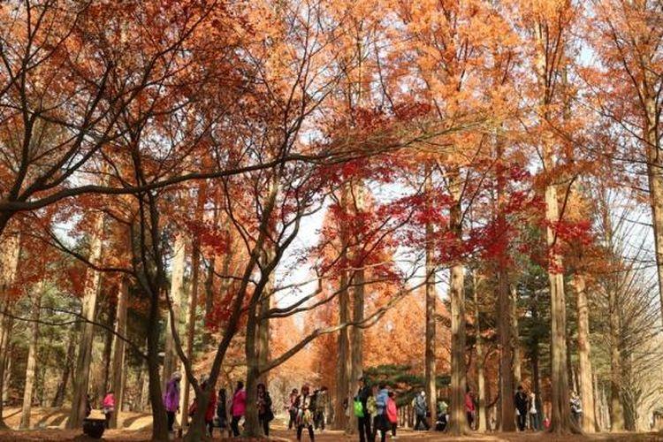 Nami Island, Korea Selatan adalah pulau wisata yang berjarak dua jam dari Seoul.
