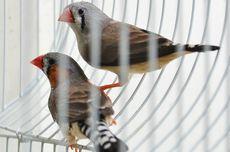 Tips Membersihkan Kandang Burung Peliharaan