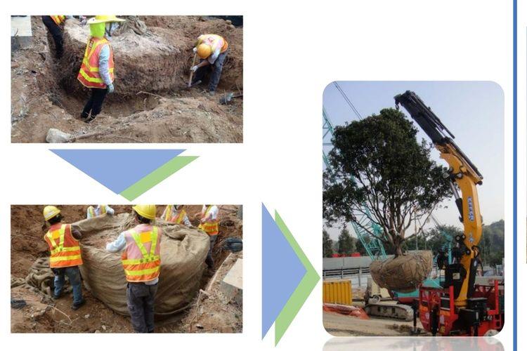 Metode root balling untuk memindahkan pohon di area Monas dan Thamrin karena adanya pengerjaan MRT Fase 2A.