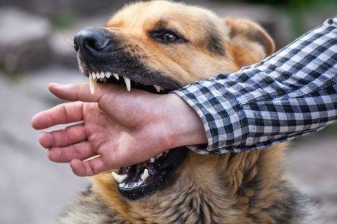 Anjing Rabies Gigit 8 Warga di Kintamani
