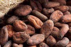 Perjalanan Panjang Cokelat dari Biji hingga Layak Dimakan