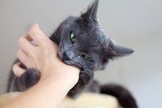 Apakah Gigitan Kucing Berbahaya bagi Kesehatan?