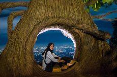 Menikmati Keindahan Malam di Wisata Hits Jogja, Pinus Pengger
