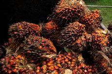 Studi IUCN: Kelapa Sawit 9 Kali Lebih Efisien dari Sisi Pengunaan Lahan