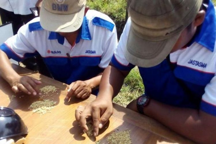 Petugas dari Bulog memeriksa gabah yang dibeli dari petani di Desa Karang Banyu, Kecamatan Widodaren, Kabupaten Ngawi, Jawa Timur pada Rabu (8/3/2017). Pada musim panen raya ini Bulog membeli gabah petani dengan harga Rp 3.700 per kilogram dengan kadar air 25 persen.