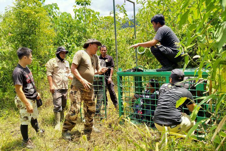 Tim TNKS dan BKSDA saat memasang perangkap guna menangkap harimau, untuk kemudian di relokasi ke daerah yang jauh dari permukiman warga