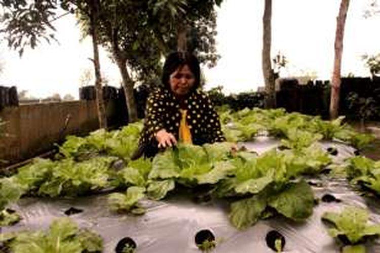 Srini Maria Margaretha, merawat tanaman sayur dan buah organik di pekarangan rumahnya di Dusun Ringin, Desa Sengi, Kecamatan Dukun Kabupaten Magelang, Jawa Tengah.