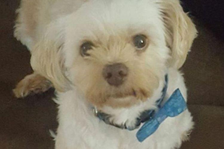 Timothy, si anjing penyelamat, ketinggalan penerbangan lanjutan dari Kuala Lumpur dan meninggalkan dokumen imigrasinya di Alice Springs. (Australia Plus)