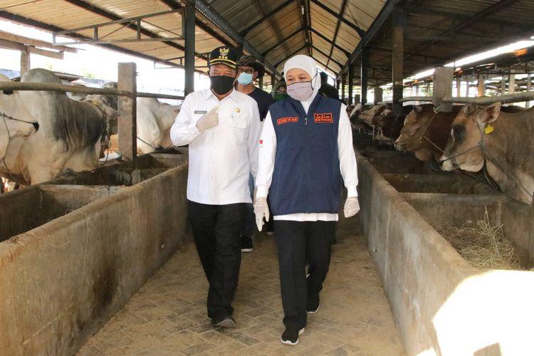 Gubernur Jawa Timur Khofifah Indar Parawansa (kanan) bersama Bupati Lamongan Fadeli (kiri), saat mengunjungi peternakan hewan kurban di Kabupaten Lamongan, Rabu (22/7/2020).