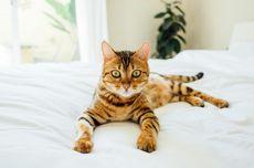 Wajib Tahu, Ini 7 Hal yang Tidak Disukai Kucing